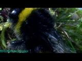 BBC «Как вырастить планету - Сила цветов» (Документальный, 2012)